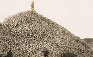 buffaloskulls