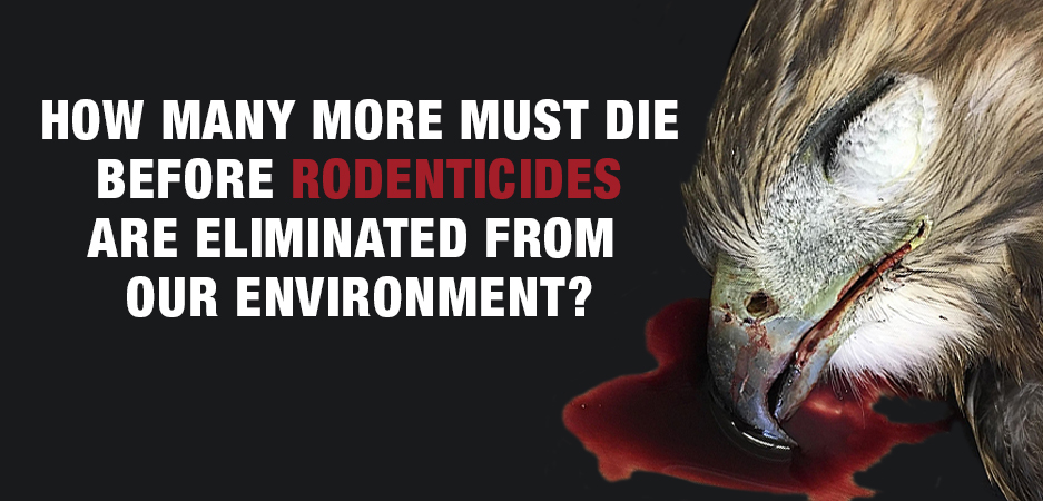 Rodenticides are again the focus… We need a solution