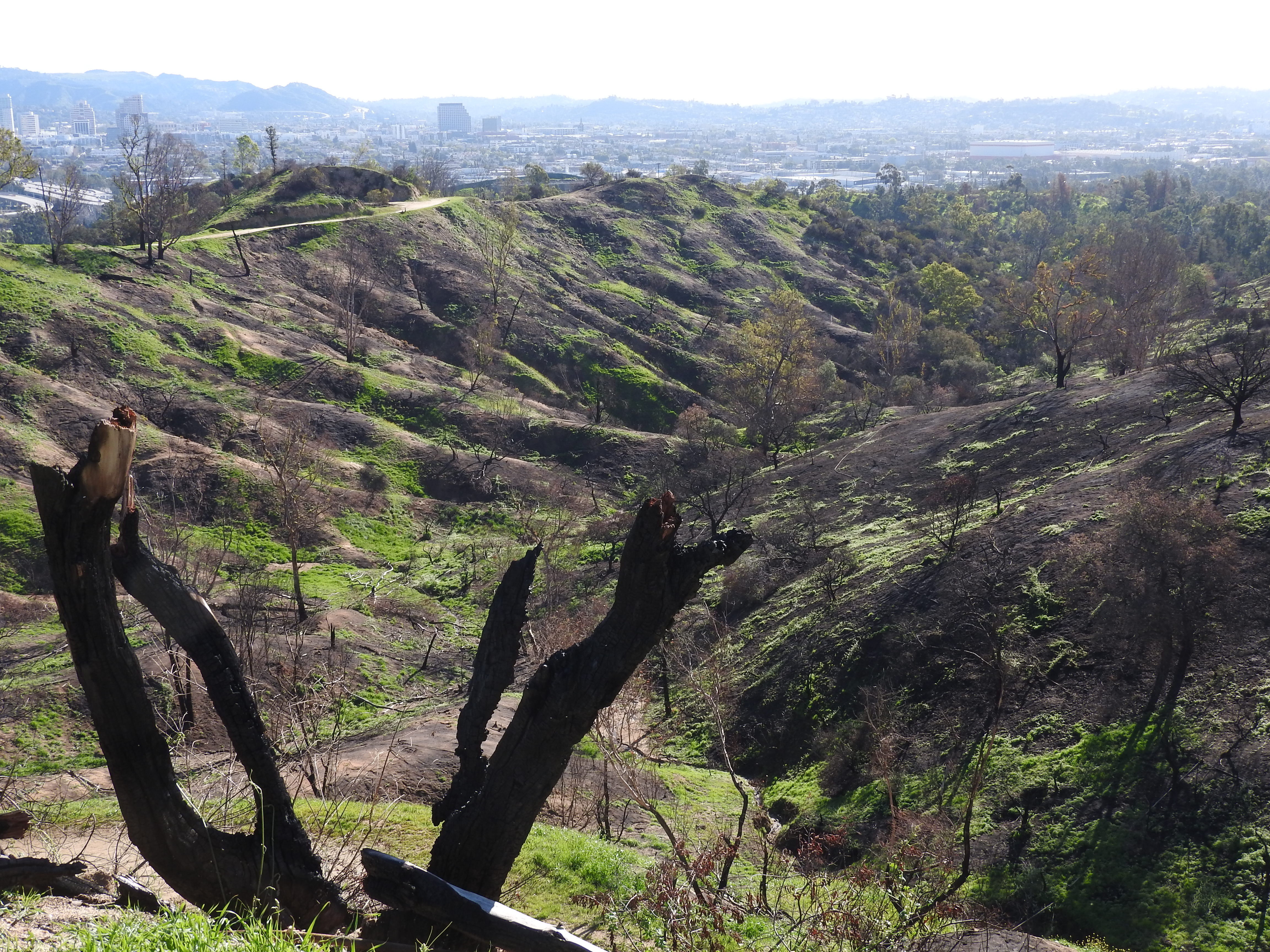 Preparing for Fire Season in Griffith Park
