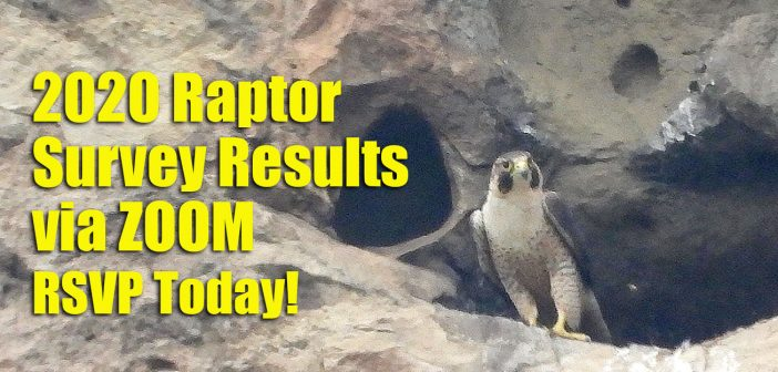 2020 Raptor Study Results are now Online