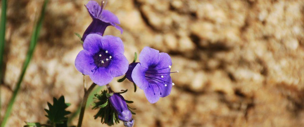 Wild Flower-Brenda Rees