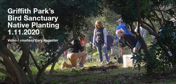 Bird Sanctuary Planting from Jan., 2020