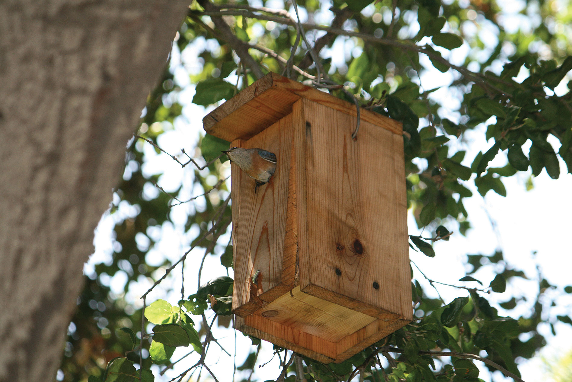 Update: Bluebird Nesting Boxes