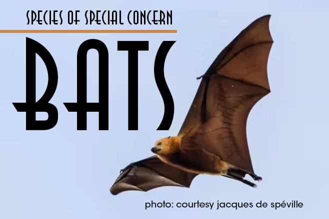 Species of Concern: Miguel Ordeñana Discusses Griffith Park Bats