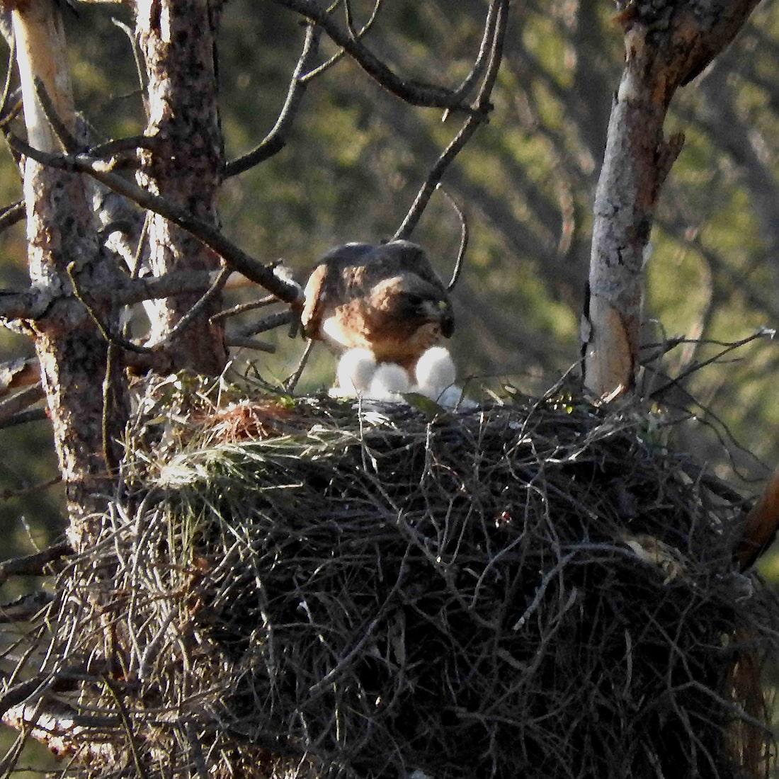 GHans-Nest-DSCN8442